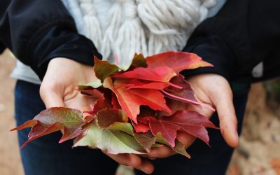 Fall Fun Brought to You by Speedy Loans